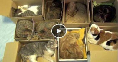 chats dans des cartons